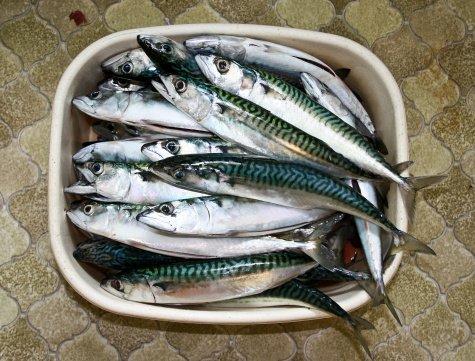 银屑病患者是否可以食用鱼肉
